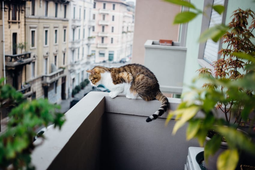 den balkon katzensicher machen. Black Bedroom Furniture Sets. Home Design Ideas